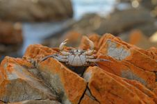 Free Crab Stock Photos - 15103993