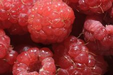 Free Juicy Red Raspberries Stock Image - 15104811