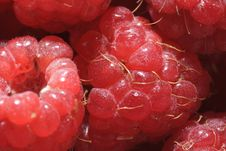 Free Juicy Red Raspberries Stock Images - 15104994