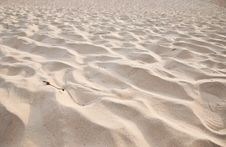 Sandy Stock Photography
