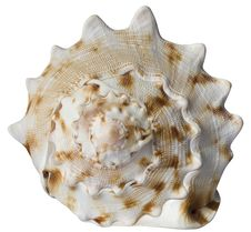 Free Sea Shell Stock Images - 15106094