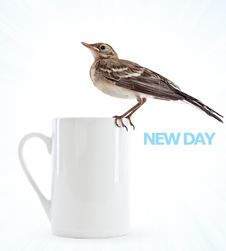Free Nestling Of Bird (wagtail) On Cup Stock Images - 15106364