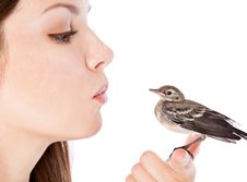Nestling Of Bird (wagtail) On Hand Stock Photo