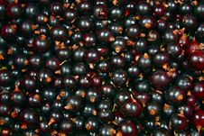 Free Currants Background Stock Photo - 15106560