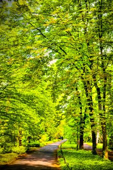 Free Park In Spring Time Royalty Free Stock Photo - 15107555