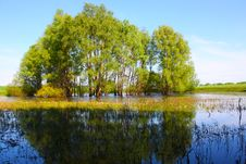 Free Willow Trees In The Lake Royalty Free Stock Photo - 15107735