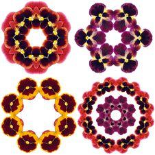 Pansy Flower Mandalas Stock Photography