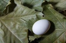 Free Egg And Foliage Royalty Free Stock Photos - 15108378