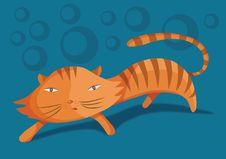 Free Cat Stock Photo - 15108480