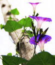 Free Purple Flower Stock Image - 15110421