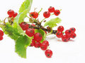 Free Red Currant Berries Royalty Free Stock Photo - 15114305
