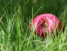 Free Apple In The Green Grass Stock Image - 15110441