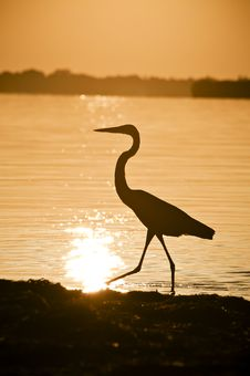 Free Great Blue Heron Surnise Silhouette Stock Photography - 15110802