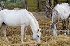 Free Horses Stock Image - 15110931