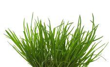 Free Green Grass  Bush Royalty Free Stock Image - 15111266