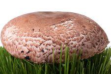 Free Mushroom Stock Photos - 15111333