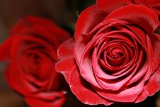 Free Red Rose Stock Photos - 15111793
