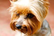 Free Dog Royalty Free Stock Photo - 15112895