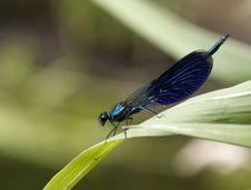 Free Dragonfly Royalty Free Stock Photography - 15113897