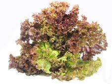 Free Lettuce Vegetable Salad Royalty Free Stock Image - 15114766