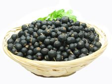 Free Black Currant Crop In Bowl Stock Photography - 15115062