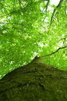 Free Looking Up A Tree Royalty Free Stock Photos - 15115798