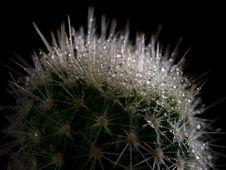Free Cactus Royalty Free Stock Image - 15116076