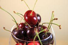 Fresh Ripe Cherries Royalty Free Stock Photo