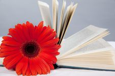 Free Red Gerbera On The Open Book Stock Images - 15117394