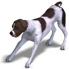 German Short Hair Dog Stock Photo