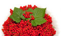 Free Red Currant Berries Stock Photography - 15124942