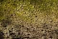 Free Tree Bark Stock Image - 15127051