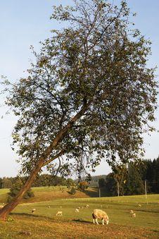 Free Under The Tree Royalty Free Stock Photos - 15122368