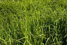 Free Green Grass Stock Photos - 15123063