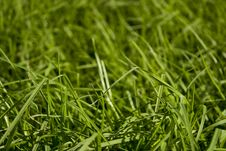Free Green Grass Royalty Free Stock Photos - 15123118