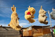 Free Teddies Hung Out To Dry Royalty Free Stock Images - 15123689