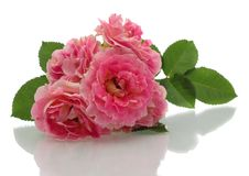 Free Pink Roses. Stock Photo - 15123800