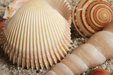 Free Seashells Assortment Stock Photography - 15124652