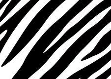 Zebra Texture Royalty Free Stock Photo