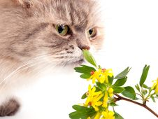 Free The Cat And Flower Royalty Free Stock Image - 15125986