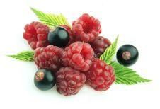Ripe Raspberry And  Black Currant Stock Photo