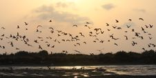 Free Gulls In Sunset Royalty Free Stock Image - 15126766