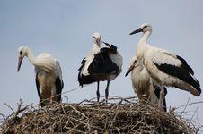 Free Nest Stock Image - 15128641
