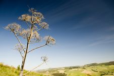 Free Dried Wild Plant Against The Blue Sky Stock Photography - 15128812