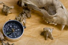 Compass And Skull Stock Image