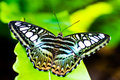 Free Beautiful Butterfly On A Leaf Stock Photos - 15134083