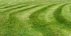 Free Green Grass Stock Photo - 15130730