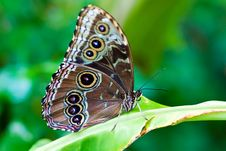 Free Beautiful Butterfly On A Leaf Stock Images - 15134114