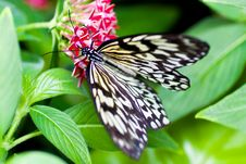 Free Beautiful Butterfly On A Flower Stock Image - 15134141