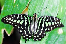 Free Beautiful Butterfly On A Leaf Royalty Free Stock Photography - 15134157